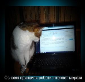 zura-blog internet
