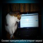 Основні принципи роботи інтернет мережі